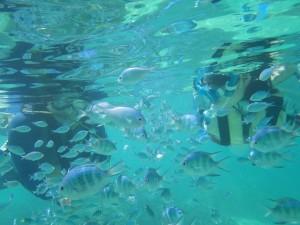 熱帯魚とシュノーケリング♪
