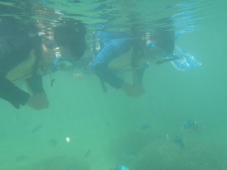 サンゴの海でシュノーケル