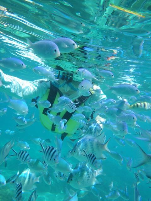 可愛い熱帯魚とシュノーケリング♪